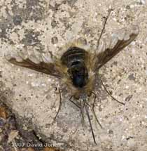 0805beefly1sm